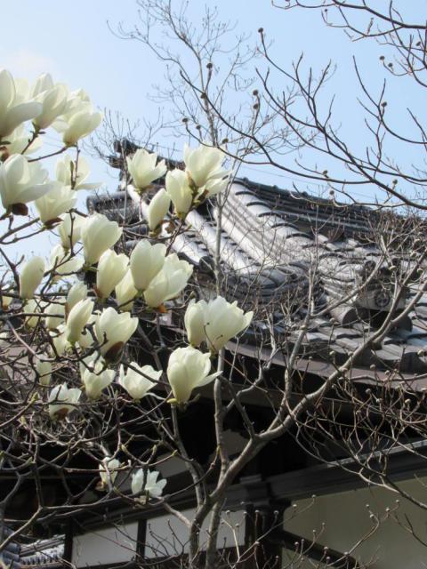 慈照寺(銀閣寺)の近くの神社お寺|浄土院