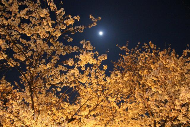 鷲尾愛宕神社の自然