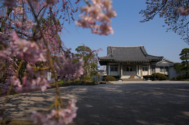 東京都善福寺の本殿