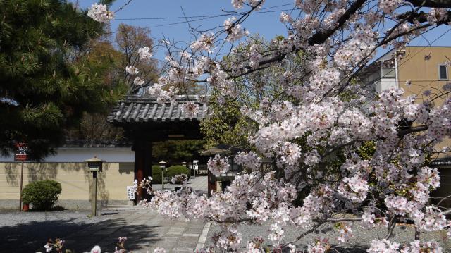京都府大報恩寺(千本釈迦堂)の山門