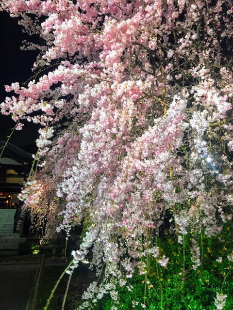 東京都南藏院の庭園