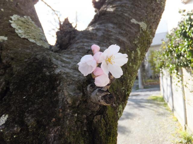 妙隆寺(神奈川県鎌倉駅) - 自然の写真