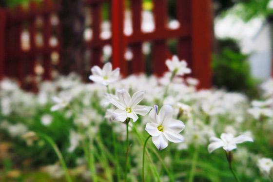 静岡県御殿稲荷神社の自然