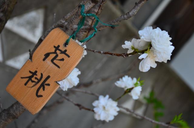 龍峰寺の自然