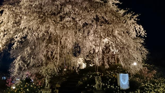 福島県金毘羅桜の庭園