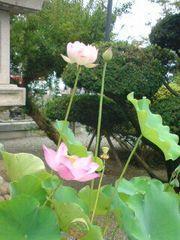 神奈川県妙蓮寺の自然
