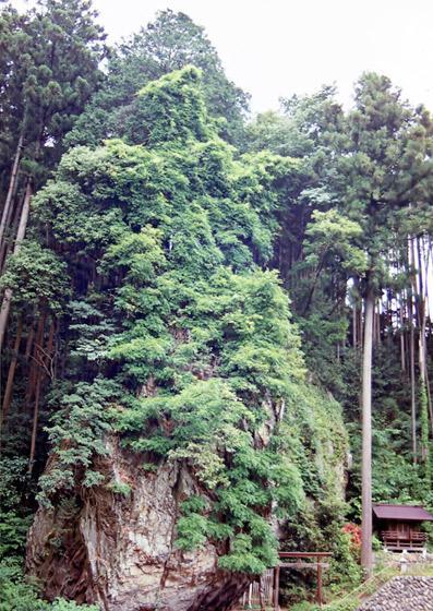 埼玉県天文霊神の自然