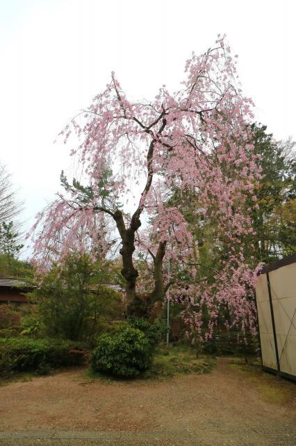 神明社の庭園