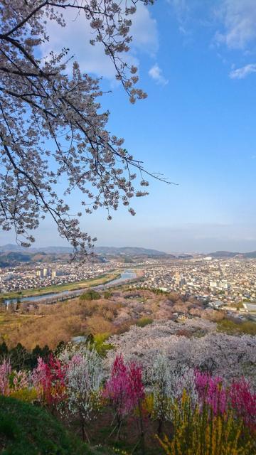 神明社の景色