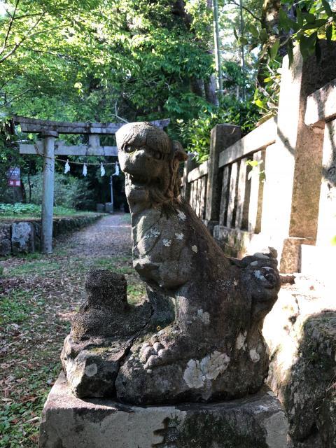 高知県朝倉神社の狛犬