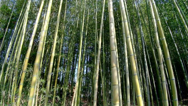 真田神社の自然