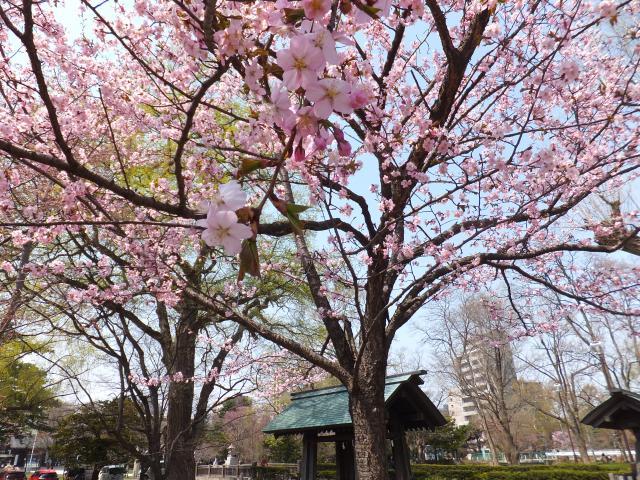 札幌護国神社の自然