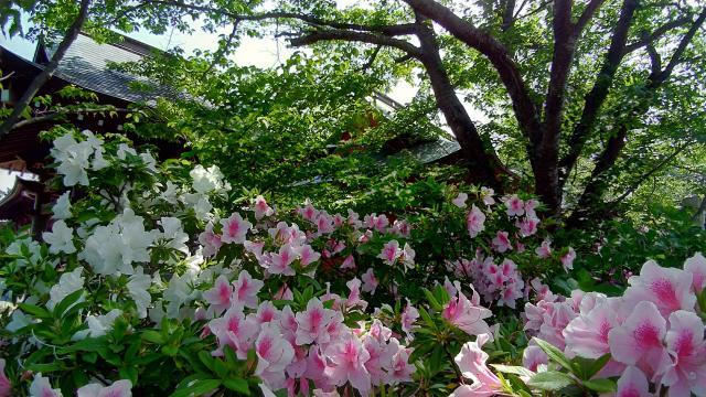 光明寺(神奈川県東海大学前駅) - 庭園の写真