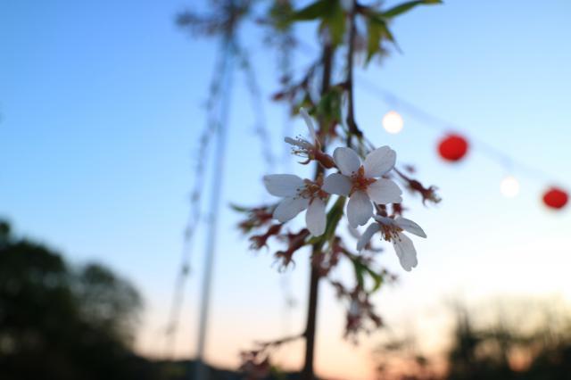 櫻岡大神宮の自然