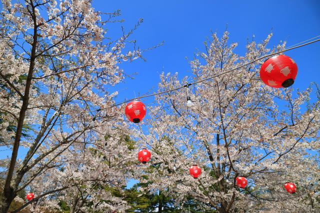 櫻岡大神宮(宮城県勾当台公園駅) - お祭りの写真