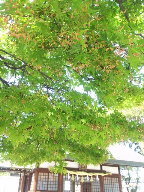 御裳神社(愛知県二子駅) - 自然の写真