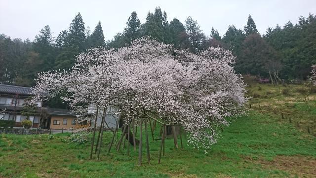 岐阜県大幢寺の自然