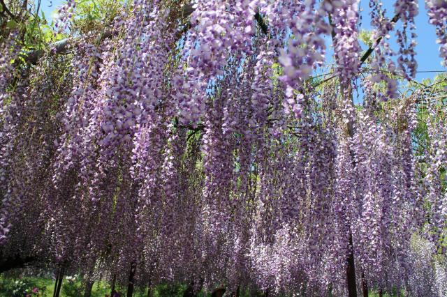 白毫寺の庭園