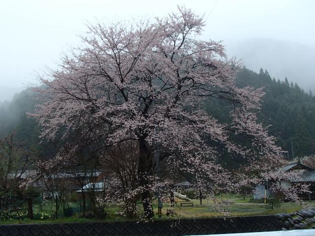 岐阜県寺尾観音堂の庭園