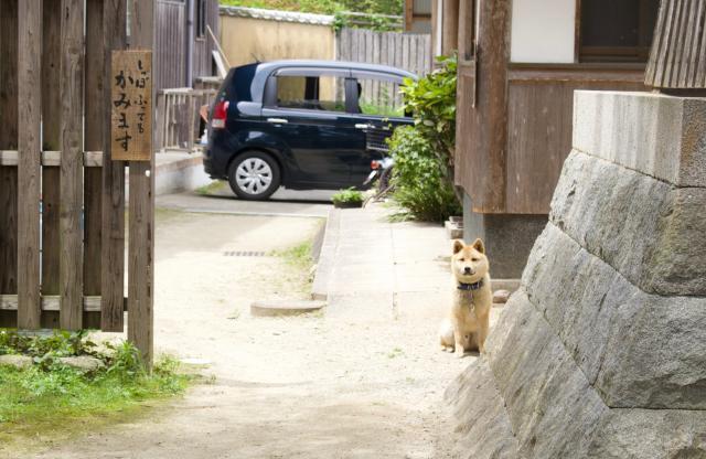 福岡県龍国寺の動物