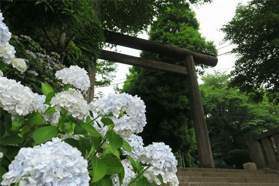 埼玉県所澤神明社の鳥居