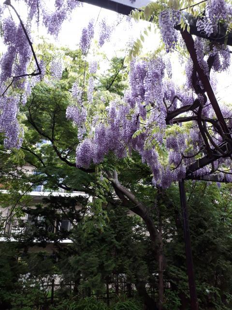 平岸天満宮・太平山三吉神社の庭園