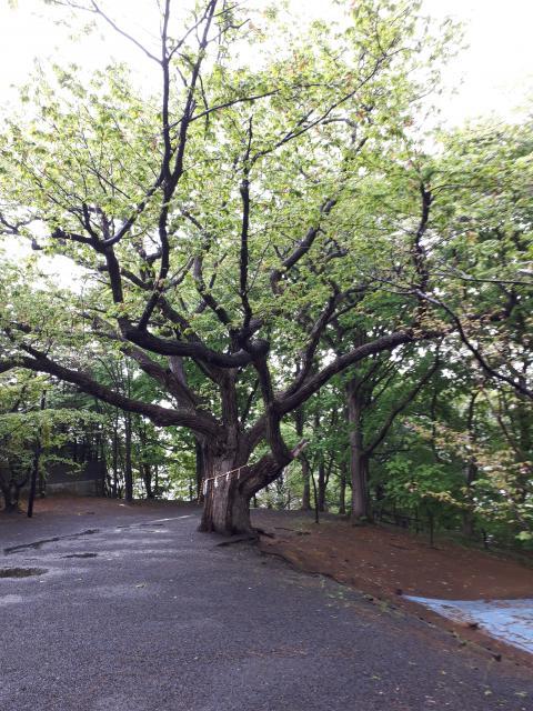 相馬神社の自然