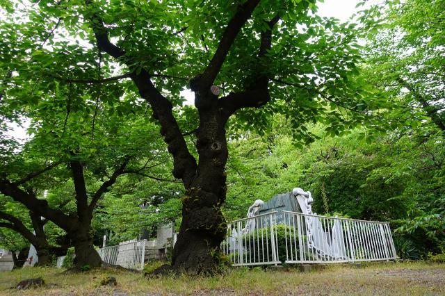 大阪護國神社(大阪府住之江公園駅) - 周辺の写真
