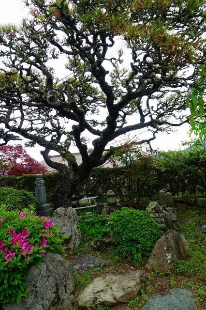 弘願寺の庭園