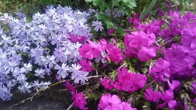 横浜御嶽神社の庭園