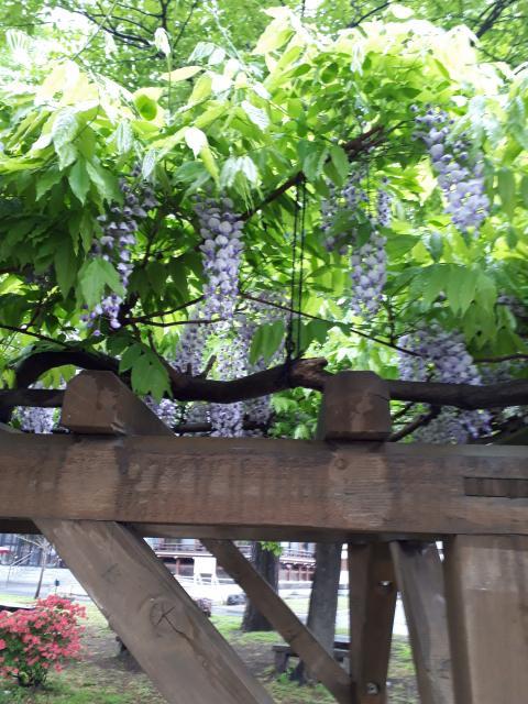 真宗大谷派札幌別院の庭園