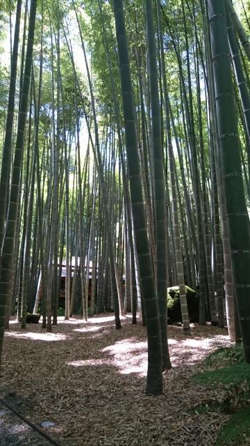 報国寺(神奈川県鎌倉駅) - その他建物の写真