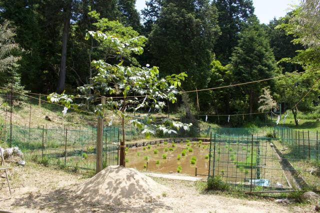 滋賀県天神社の庭園