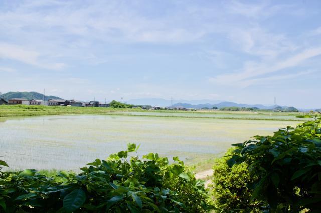 滋賀県阿賀神社の景色