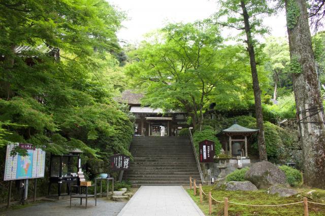 佐賀県大興善寺の写真