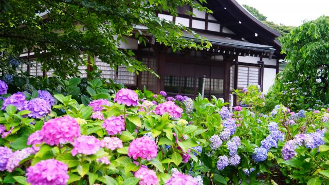 本土寺の本殿