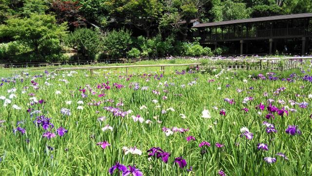 本土寺の庭園