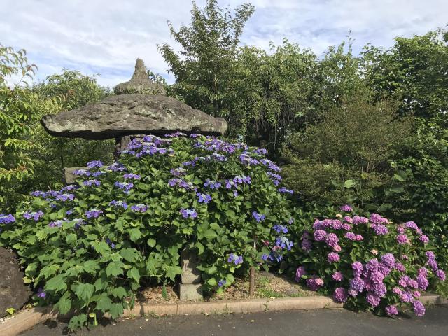 観音寺の庭園