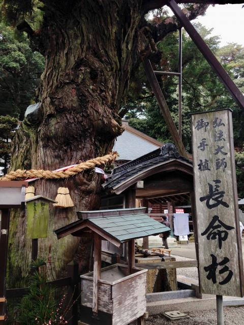 徳島県極楽寺の写真
