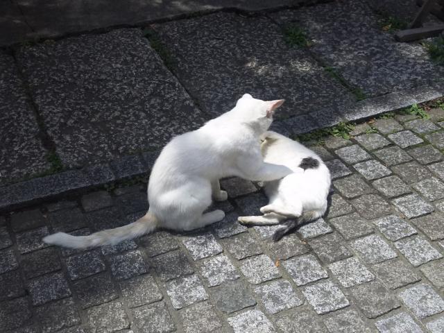 埼玉県雪塚稲荷神社の動物