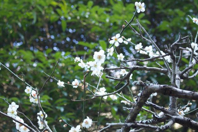 黄梅院の自然