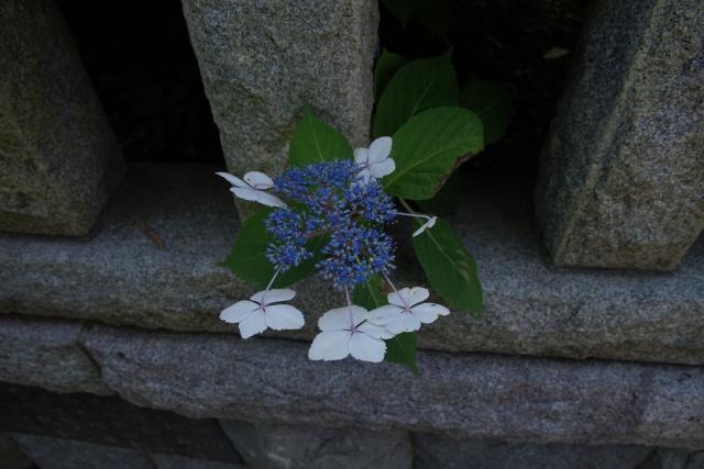 八坂大神(神奈川県鎌倉駅) - 自然の写真