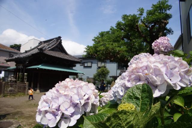 巽神社(神奈川県鎌倉駅) - その他建物の写真