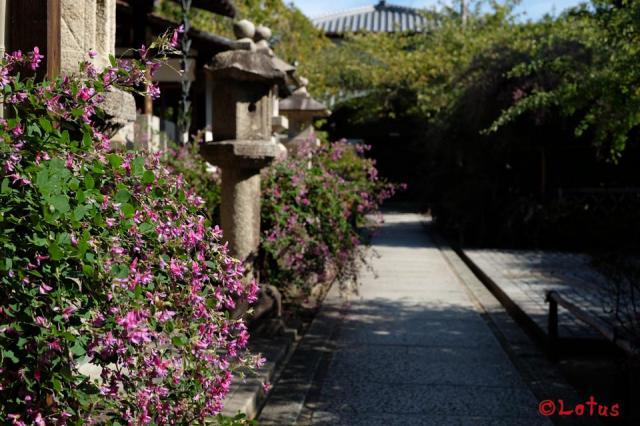 大阪府東光院の写真
