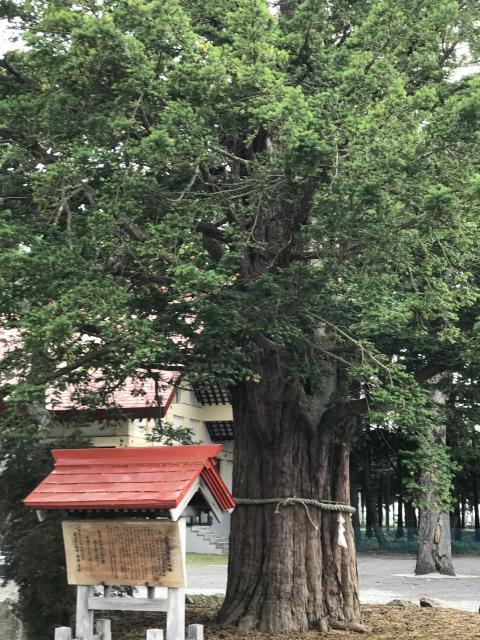 豊栄神社の建物その他