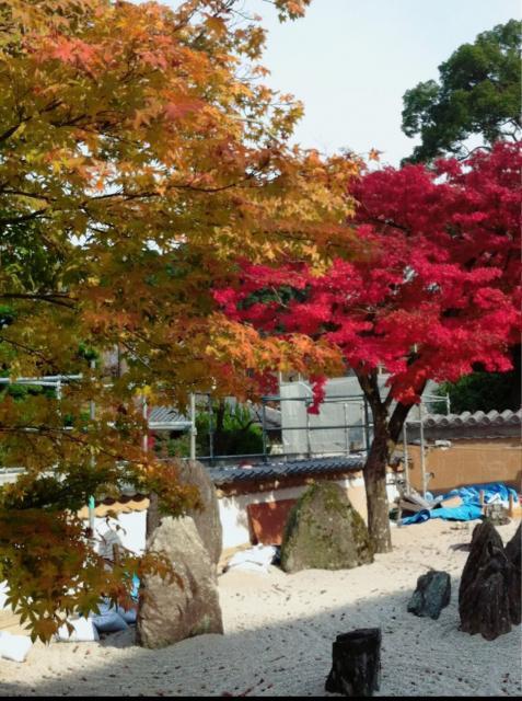 福岡県光明禅寺の庭園