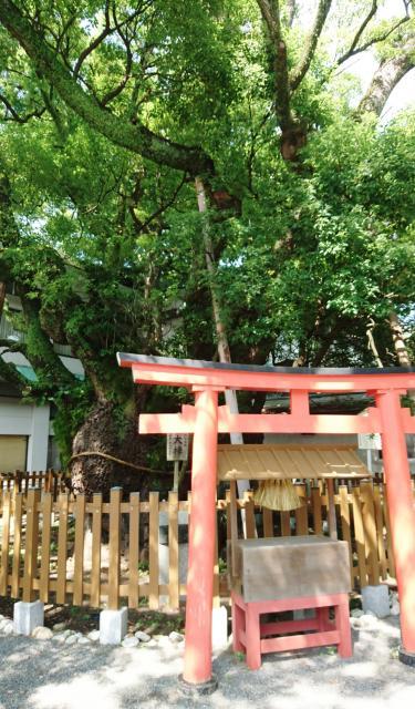 静岡県富知六所浅間神社の鳥居