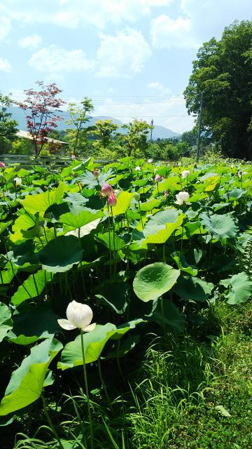 瑠璃光山 医王寺の庭園