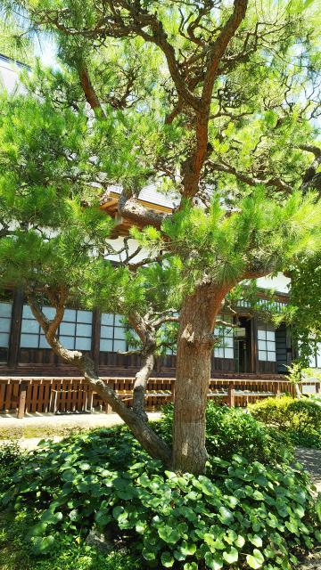 福島県大蔵寺の本殿