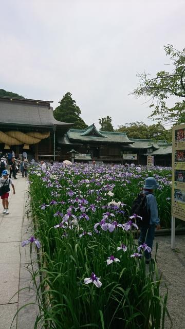 宮地嶽神社(福岡県福間駅) - 庭園の写真